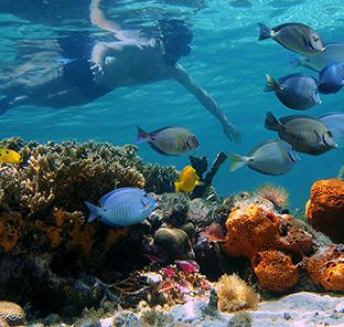BOI Bahamas Snorkeling