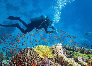 BOI Bahamas fishes diving