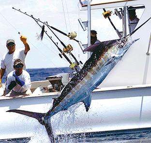 BOI Bimini Marlin Fishinig