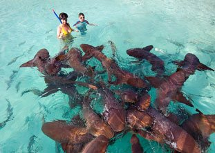 BOI Exuma Snorkeling with sharks