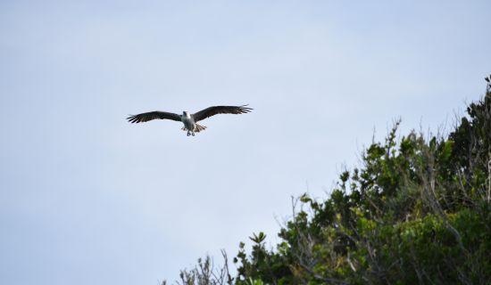 Blog | Ecotourism in Acklins is a Dream Spot for Nature Lovers | MYOUTISLANDS.COM