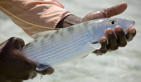 Blog | Fishing in the Southern Bahamas | MYOUTISLANDS.COM