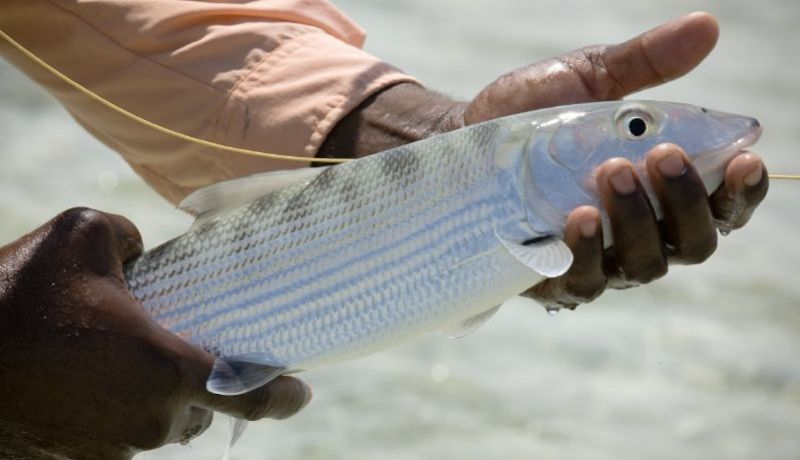 Blog | Fishing in the Southern Bahamas | caribbeantravel.com
