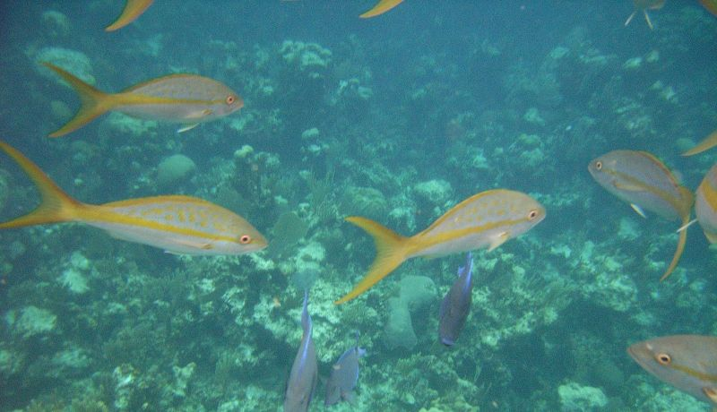 Blog | Lesser Known Activities: Red Bays Snapper Tournament | caribbeantravel.com