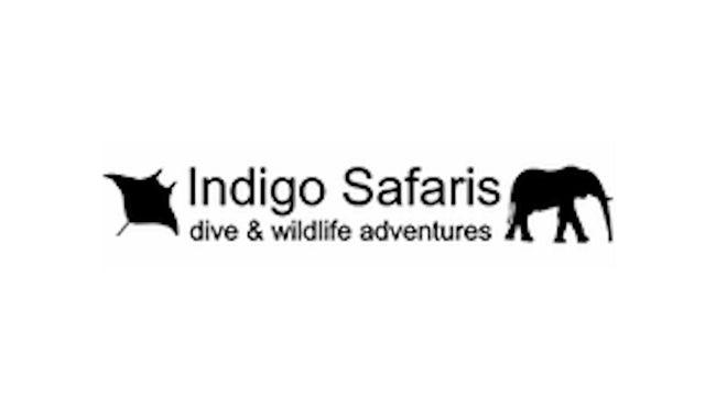 Indigo Safari image