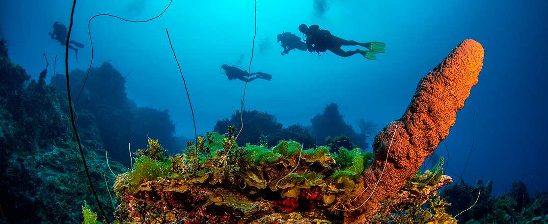 The Abacos Scuba Diving in the Bahamas Out islands